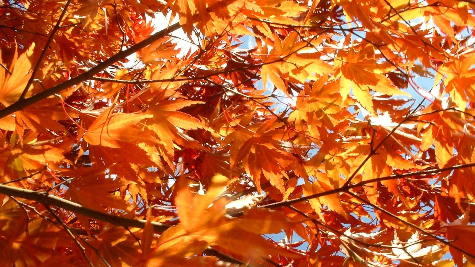 hotel zero degrees, blog, events, fall foliage, connecticut